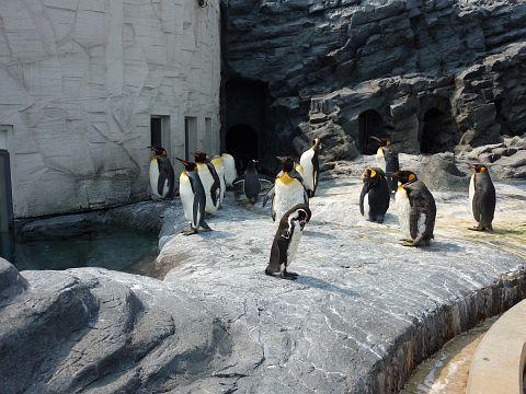 何かを見るペンギン